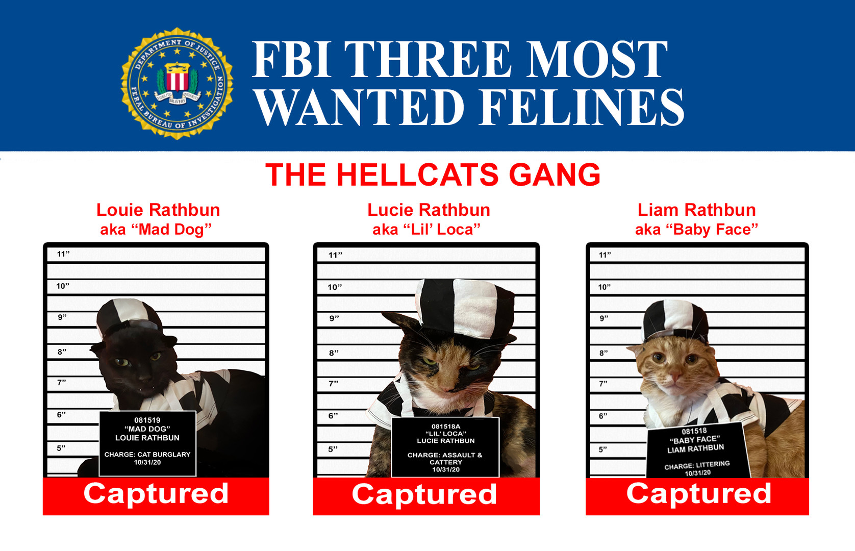 FBI Most Wanted Felines